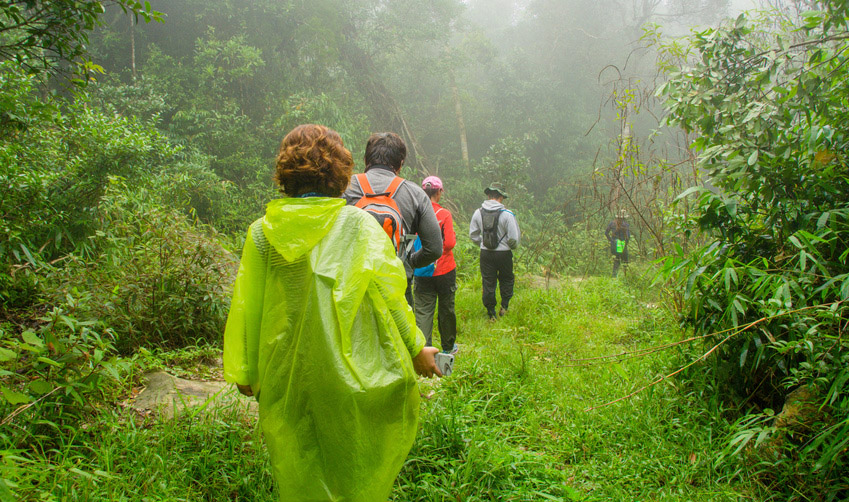 Path in a rain forest