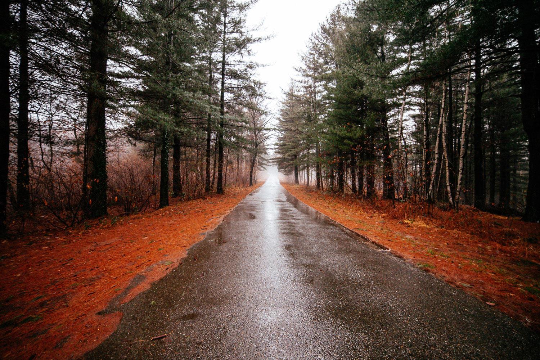 Road through rainy forest